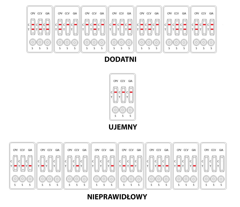 CPV+CCV+Giardia wszystkie możliwe wyniki