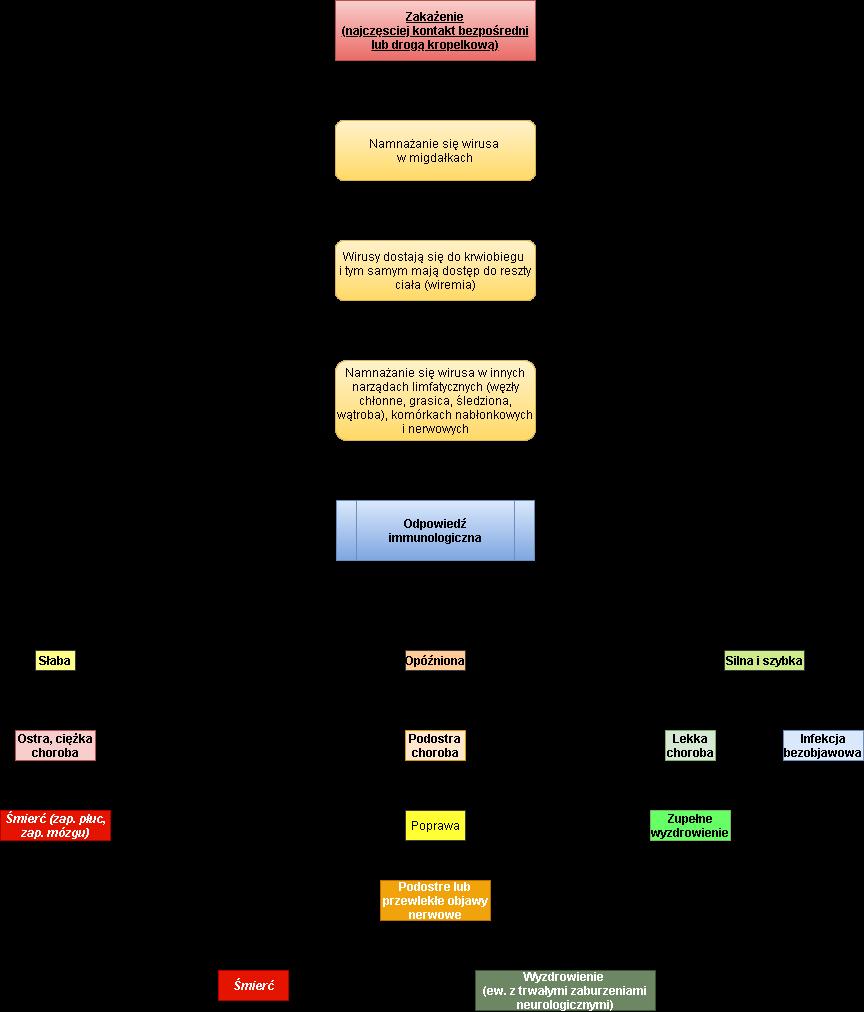 patogeneza CDV
