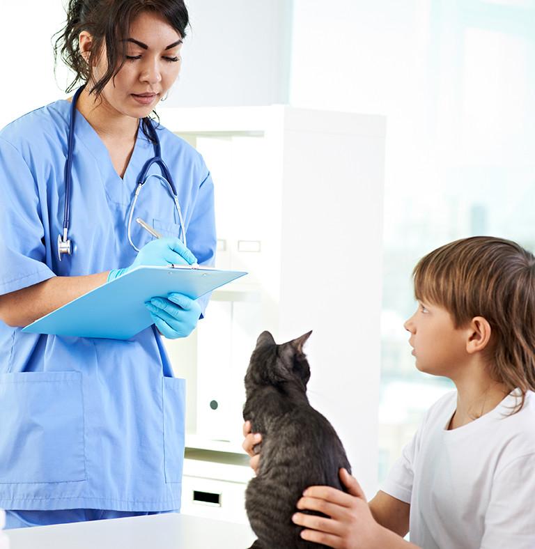 różne objawy białaczki u kotów felv