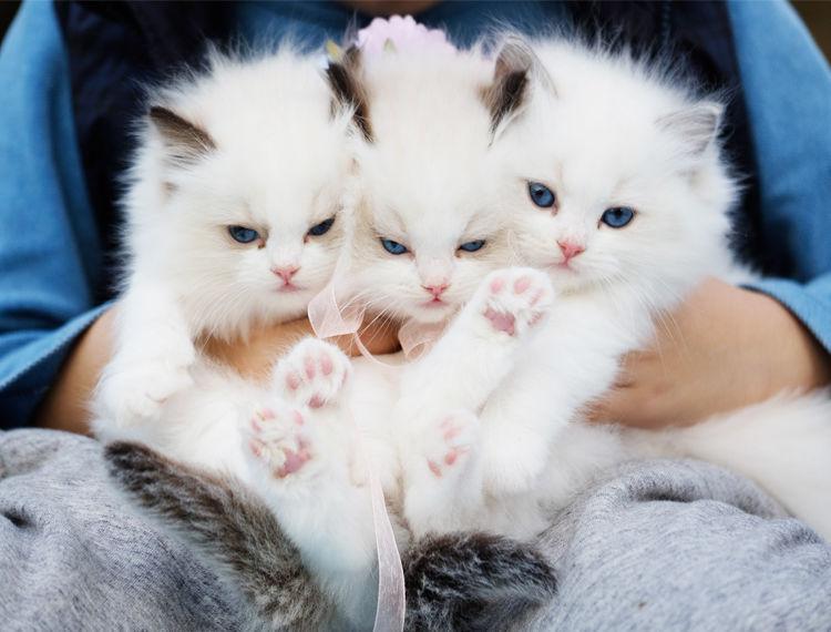 zakażenie białaczka u kotów felv