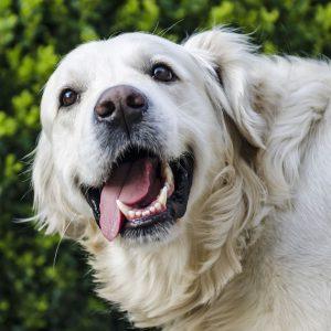 Testy dla psów