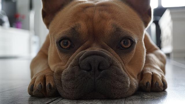 Dlaczego pies kuleje?