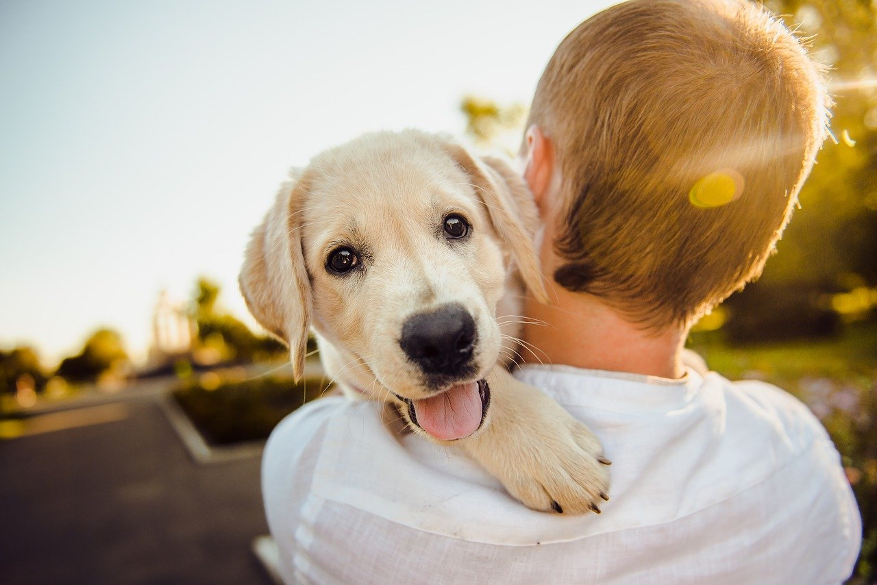 Pasożyty wewnętrzne u psa - objawy i leczenie