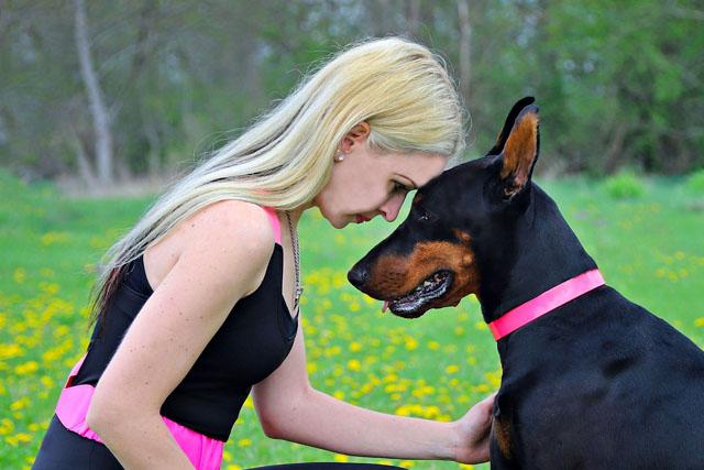 Jak pies okazuje zaufanie i miłość do właściciela