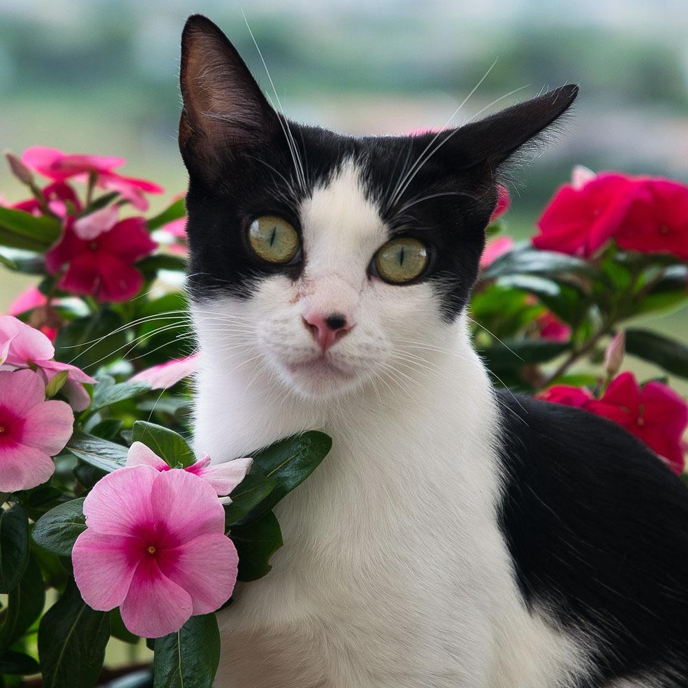 rosłiny trujące dla kota